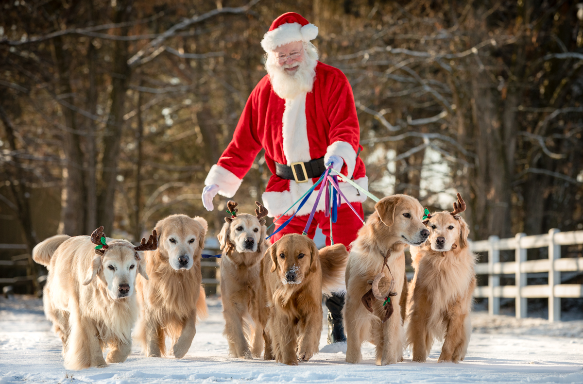 IMAGE: http://bwhip.com/galleries/BlogPhotos/santa_dogs/6U4A8572joy.jpg