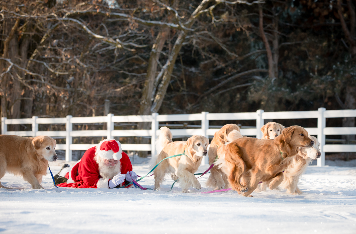 IMAGE: http://bwhip.com/galleries/BlogPhotos/santa_dogs/6U4A8595-Edit.jpg
