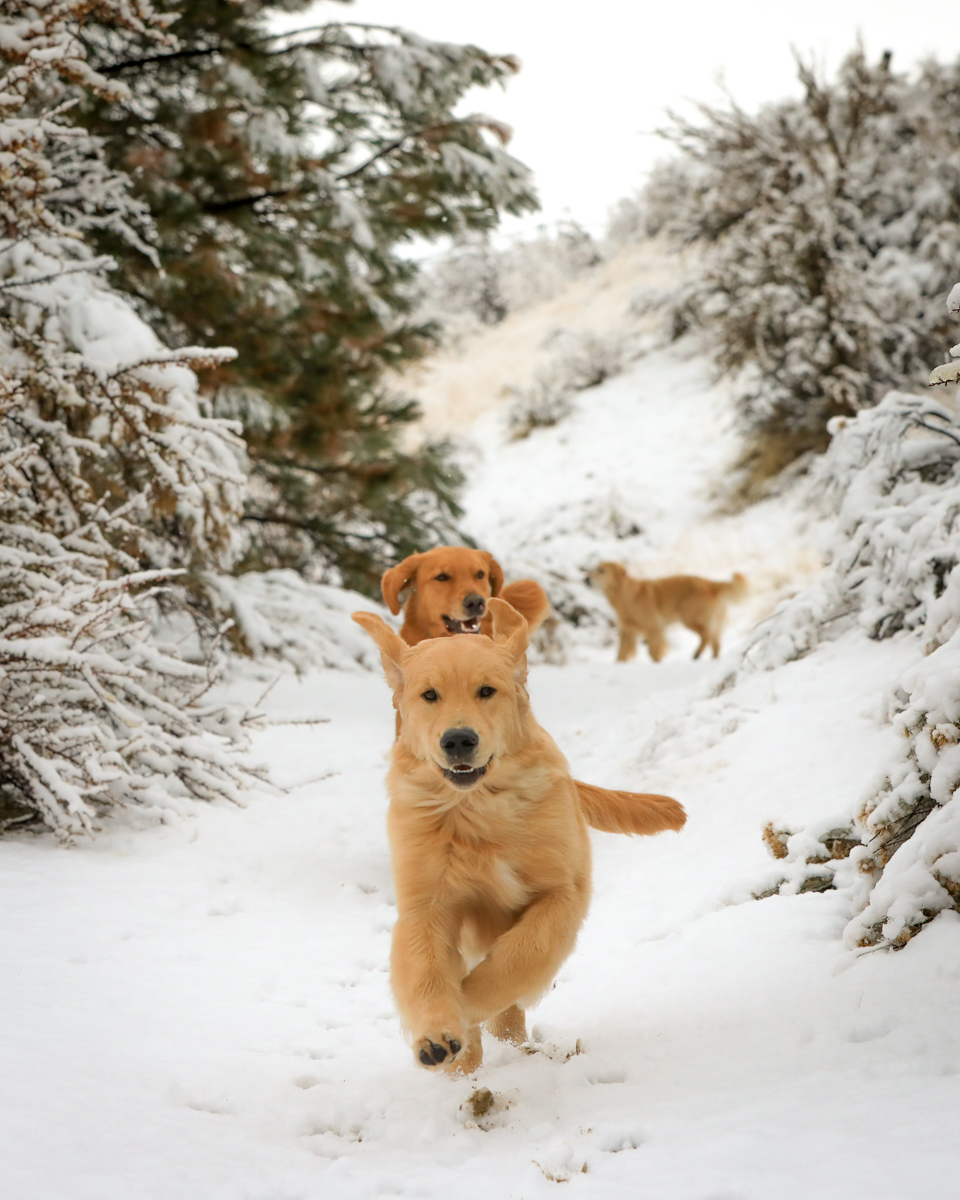 IMAGE: http://bwhip.com/galleries/BlogPhotos/snowdogs1218_moresnacks/6U4A2543.jpg