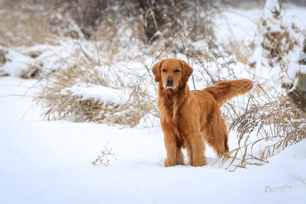 IMAGE: http://bwhip.com/galleries/BlogPhotos/snowdogs_1217/6U4A9127.jpg